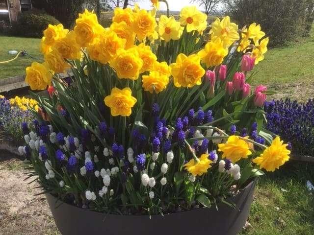 Bioflora - Frühlingsblumenzwiebeln