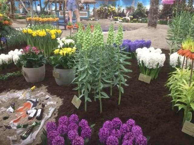 Bioflora - Blumenschau Breezand Niederlande
